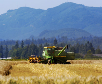Mt. Vernon, Wa. August 16, 2014.Barley is harvested ay Knutzen Farms near Mt. Vernon.